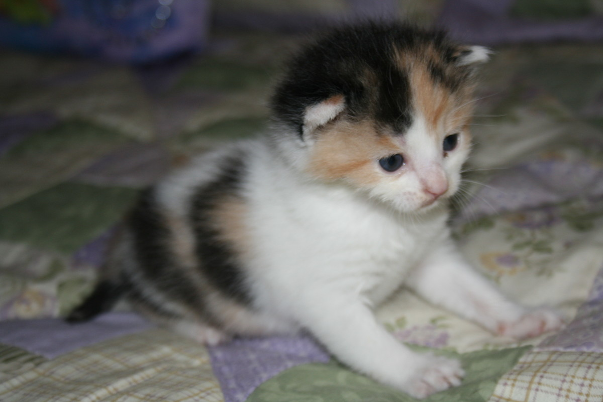 Lilly was most of the time very skeptical to eat.  Very timid.  She suddenly passed away the night of Sept. 16, 2009.  Such a beautiful kitten.