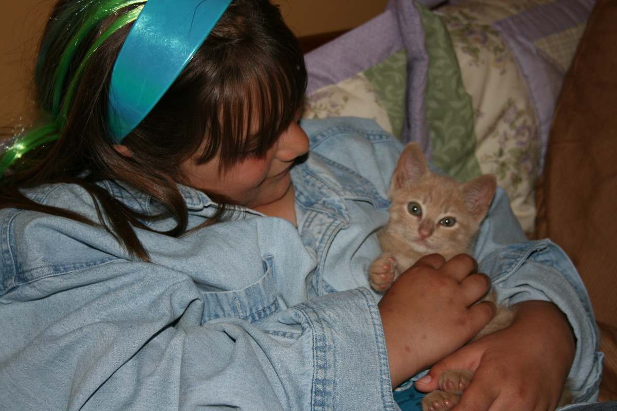 fostering-kittens-a-challenging-and-rewarding-experience