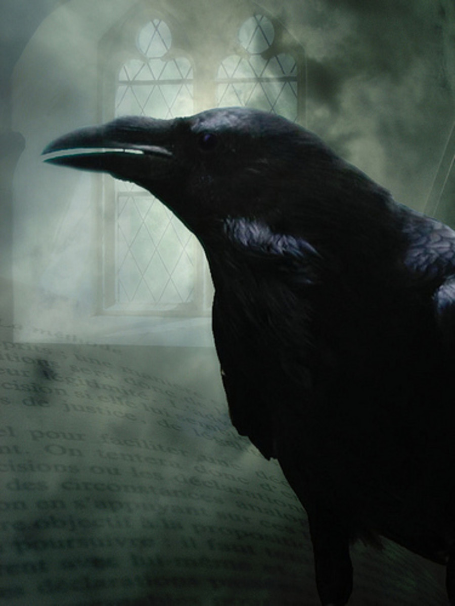 Raven have long straight beaks and ruffed necks. Image courtesy H.KoppDelaney@flicker.com