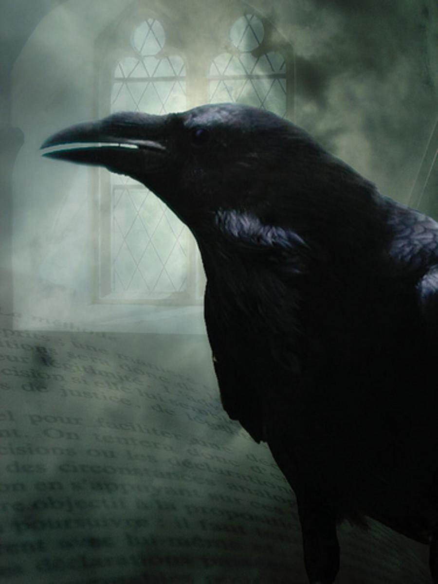 Raven have long straight beaks and ruffed necks. Image courtesy H.KoppDelaney@flicker.com