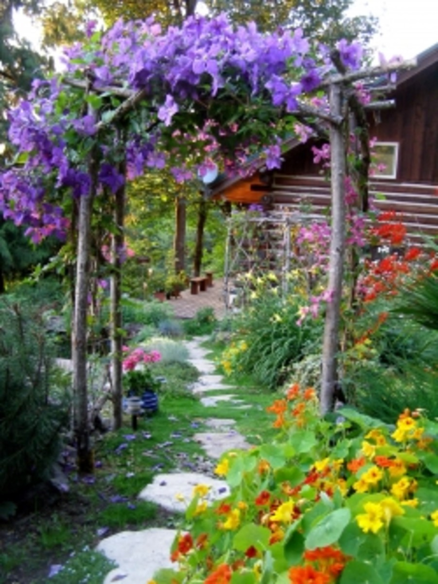 Rustic Arbor with Clematis