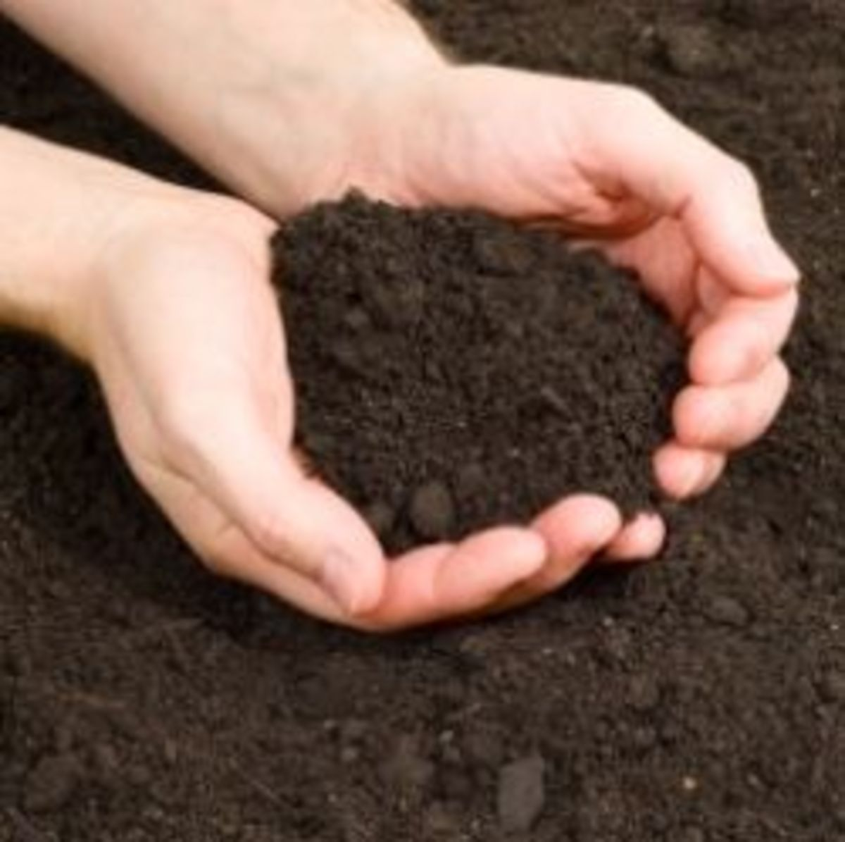 how-to-sterlize-potting-soil