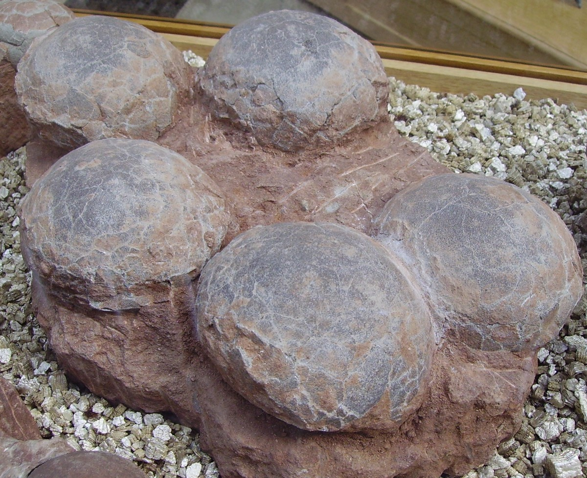 One way we learn about dinosaurs is through their fossilized eggs.