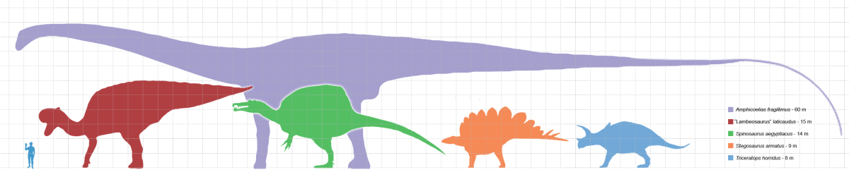 Note the small person on the left hand side. That is not really a small person, but compared to these large dinosaurs the person seems very small.