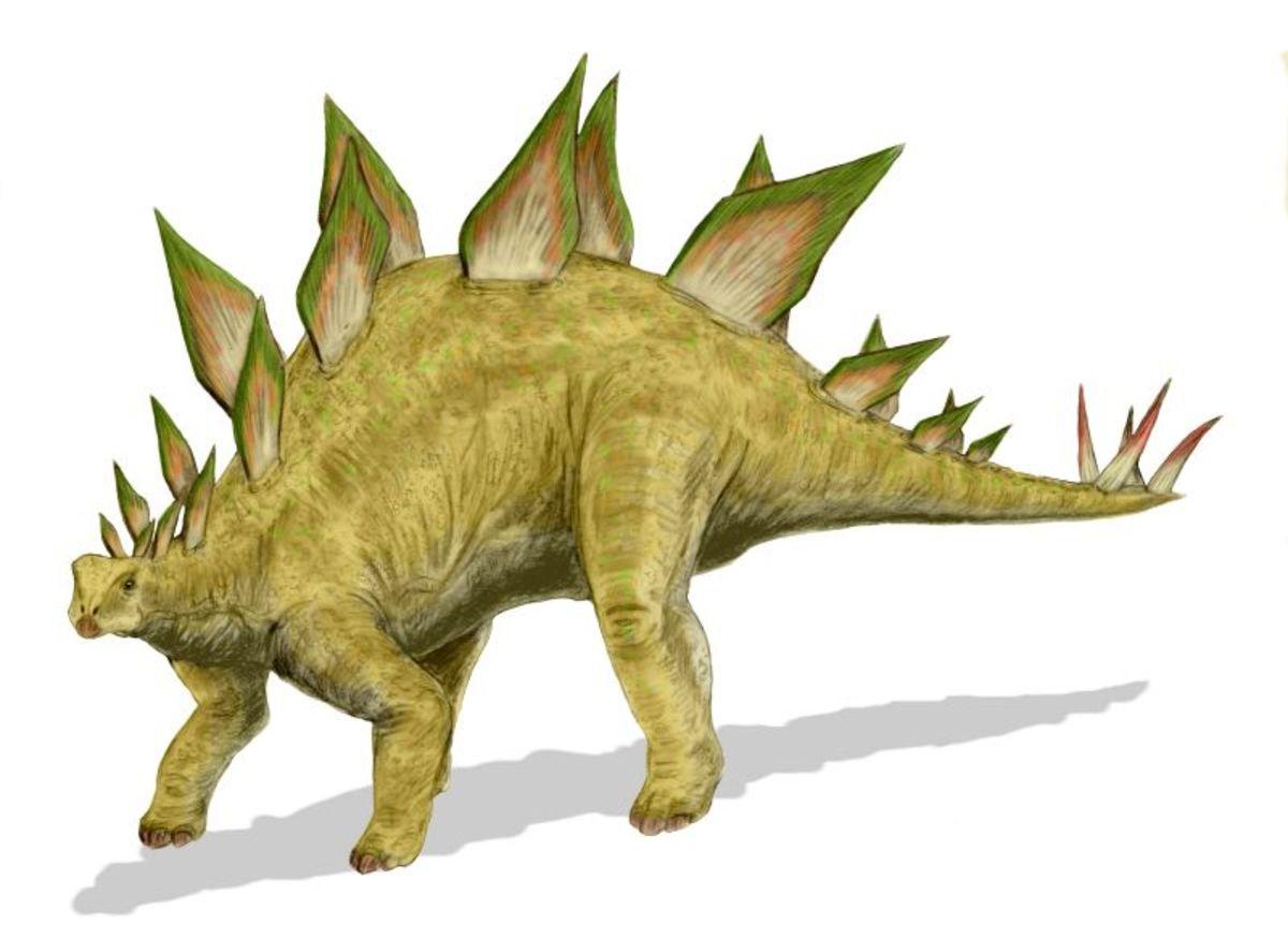 Stegosaurus - plant eater
