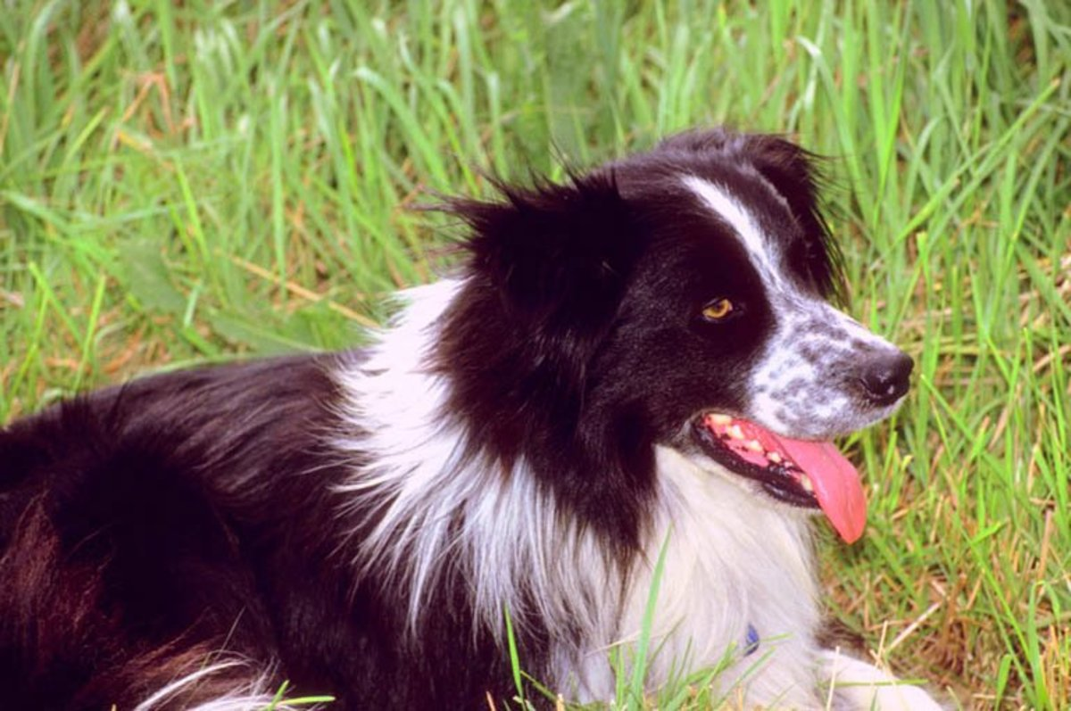 Top 5 Smart, Easy to Train Dogs