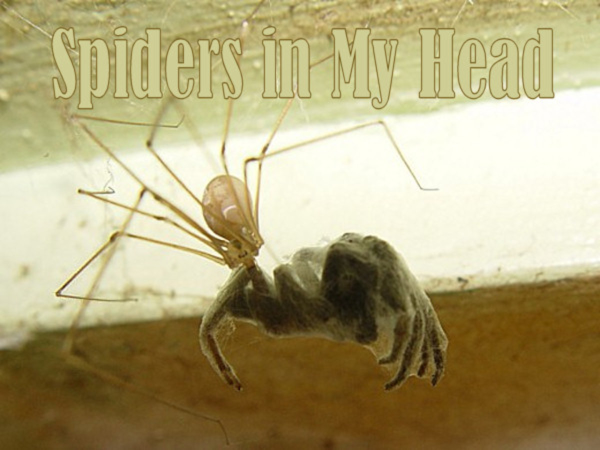 Spiders in my Head