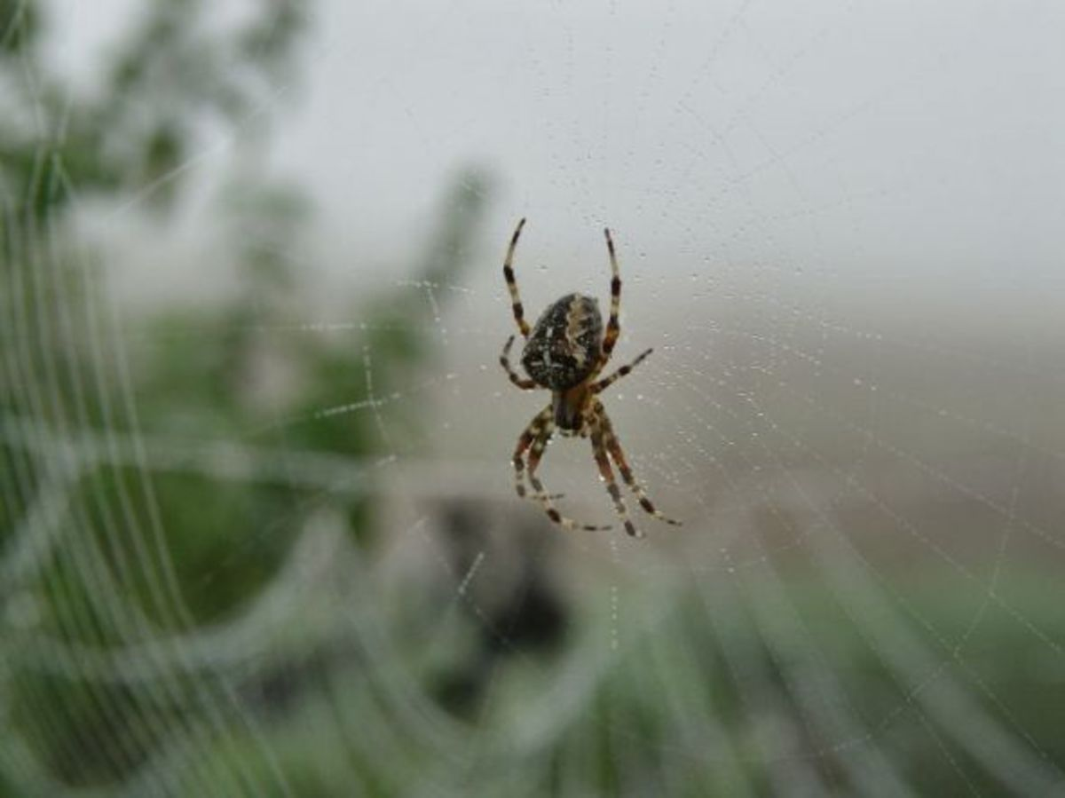 Spider in her web