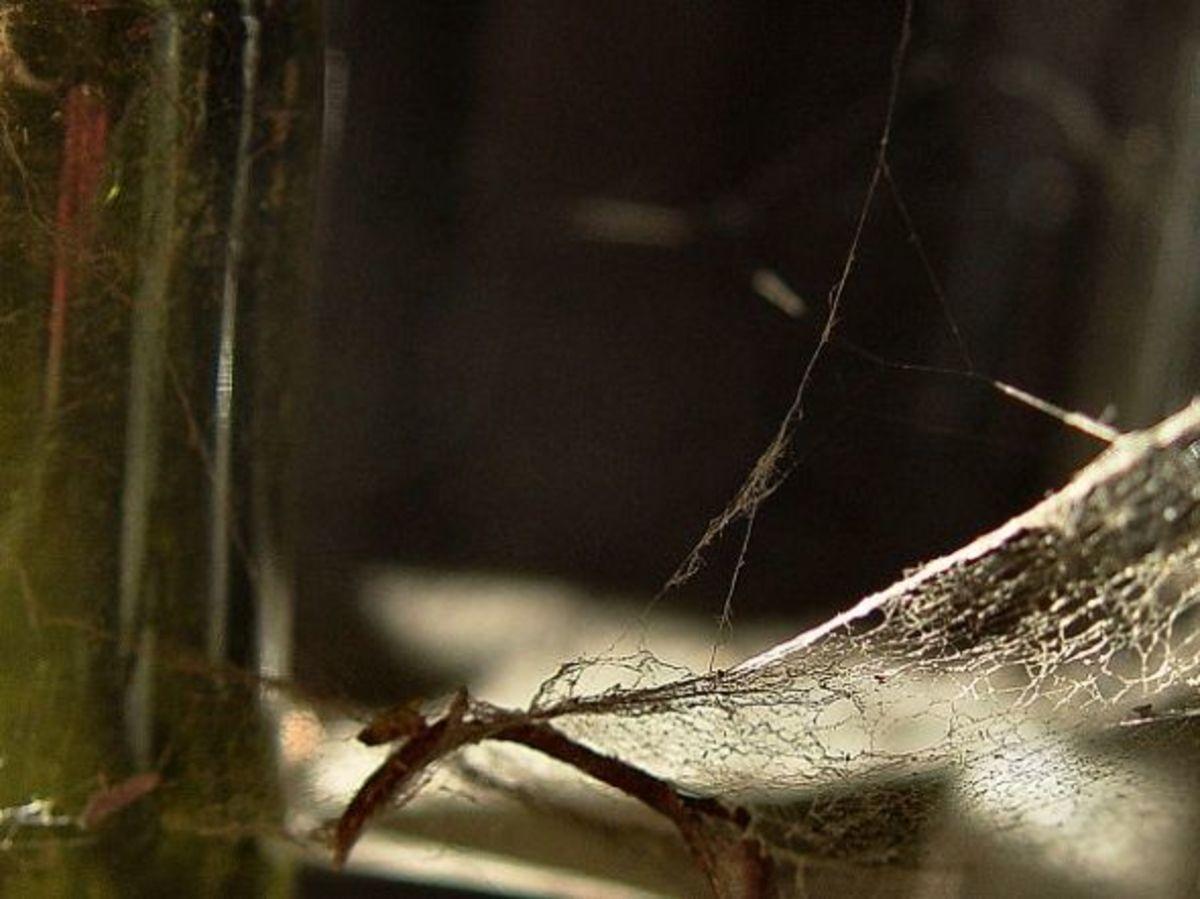 Old cobweb