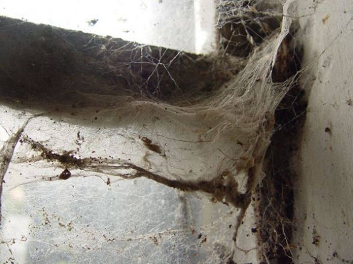 An old spider web in my barn
