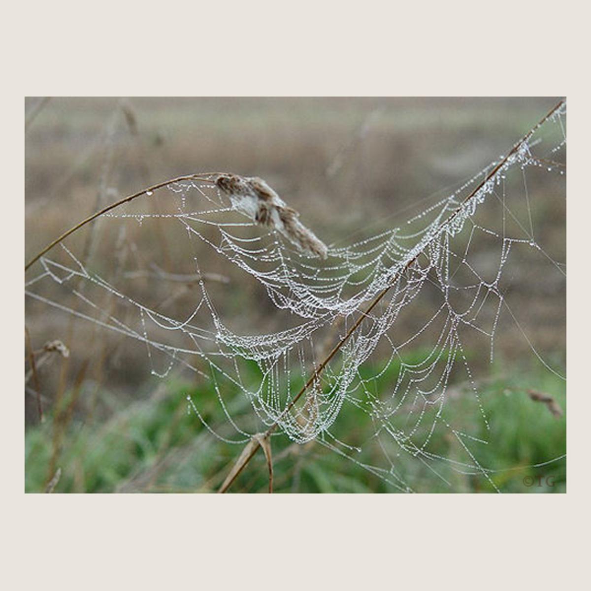Spider Free Art