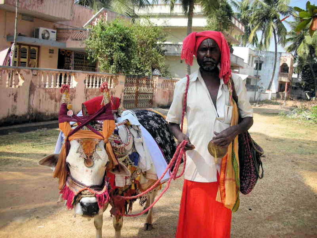 The Haridasa with his decorated bull which was a regular sight in the Bangalore of yore...