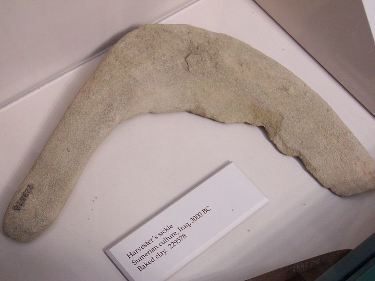 This sickle actually dates from around 3000 BC, and was used by people known as the Sumerians. But it gives us an example of what the Natufians may have used.