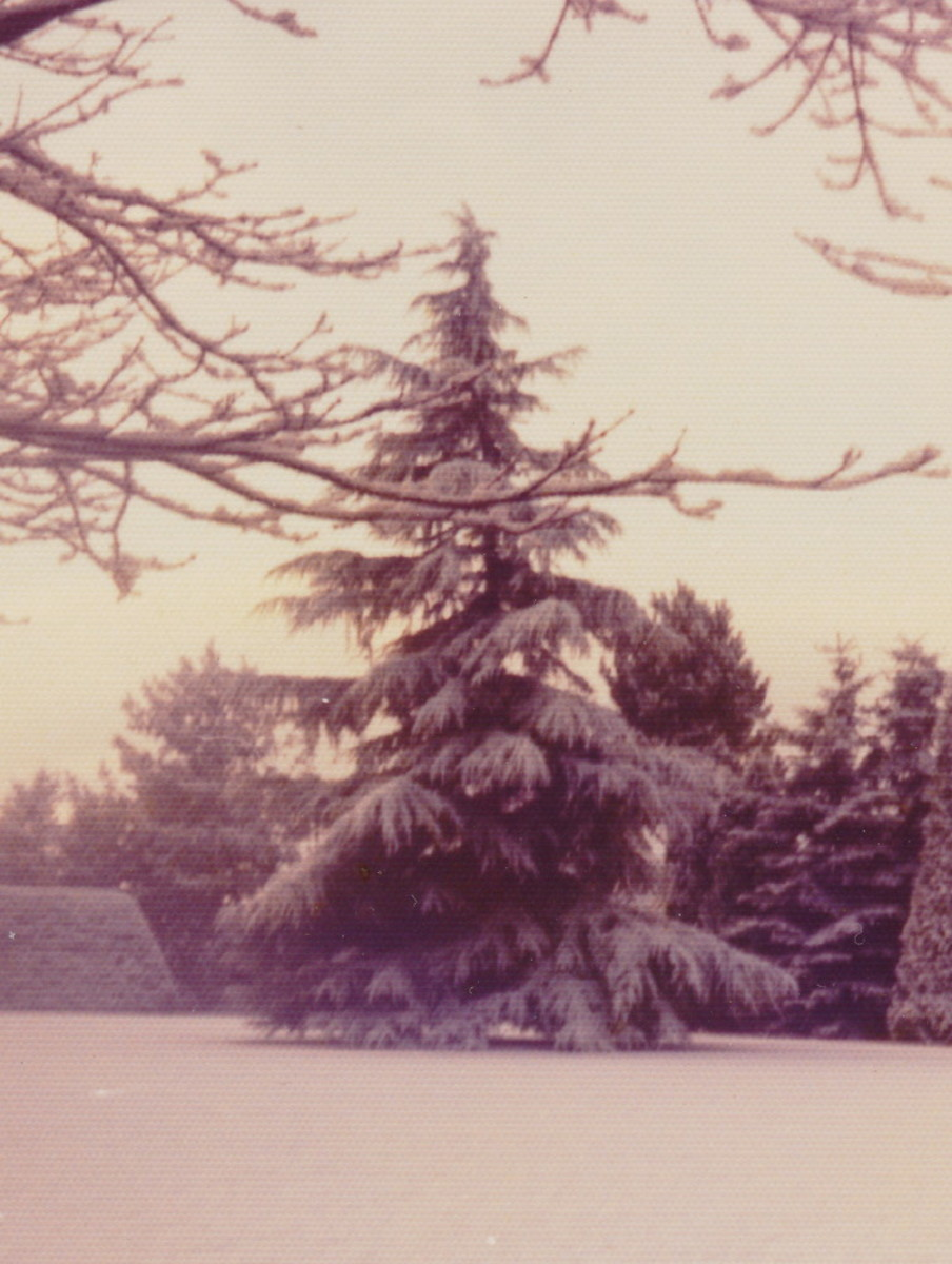Around Christmastime in our yard; Denmark, late 1960s.