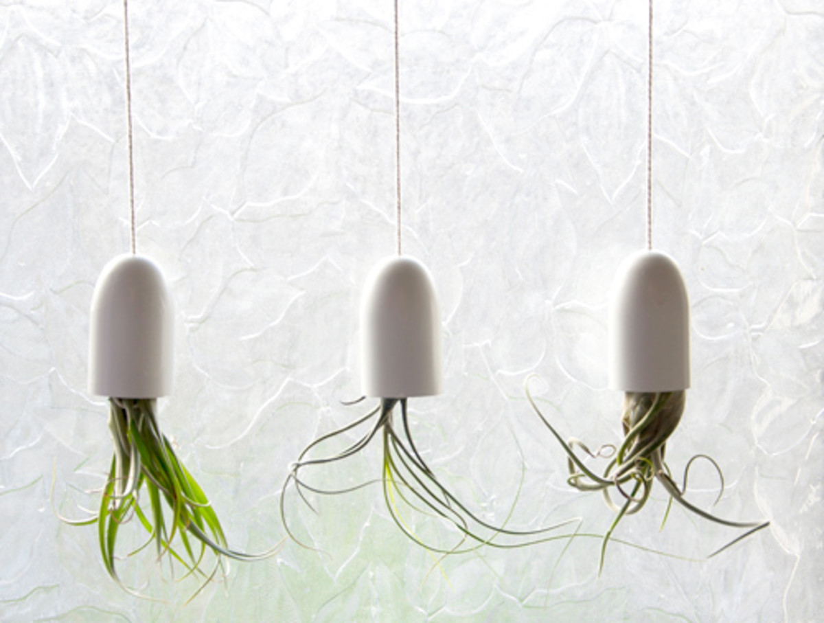 Perk Up The Indoors With Air Plants:  Air Plant Design Inspiration
