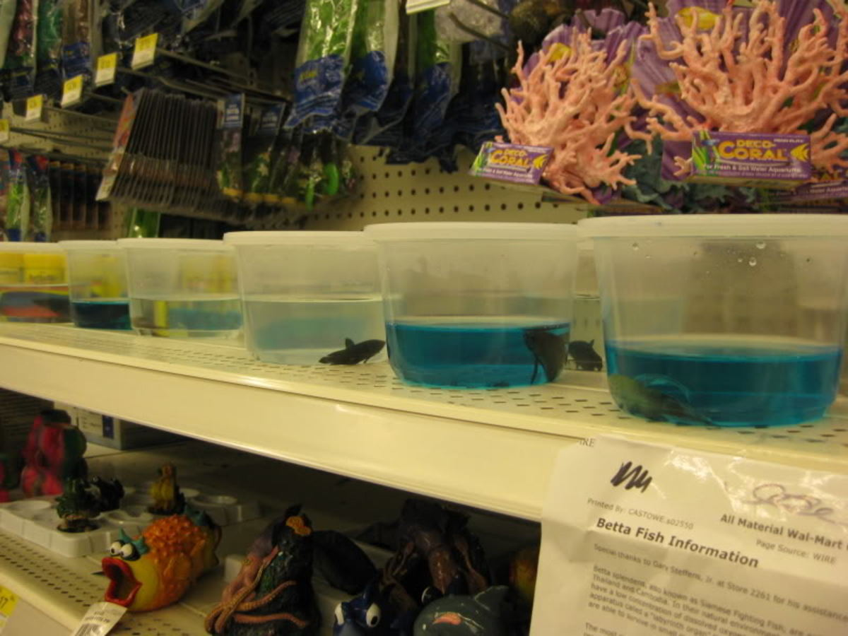 Rescuing fish from walmart for Fish at walmart