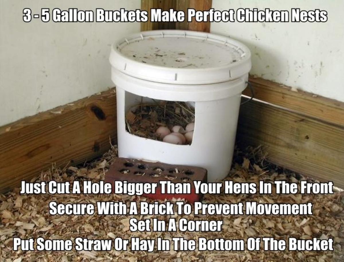 3-5 Gallon Bucket Used For Chicken Nest. Buckets like this make perfect nests for your hens. Cut the opening a little larger than your hens.