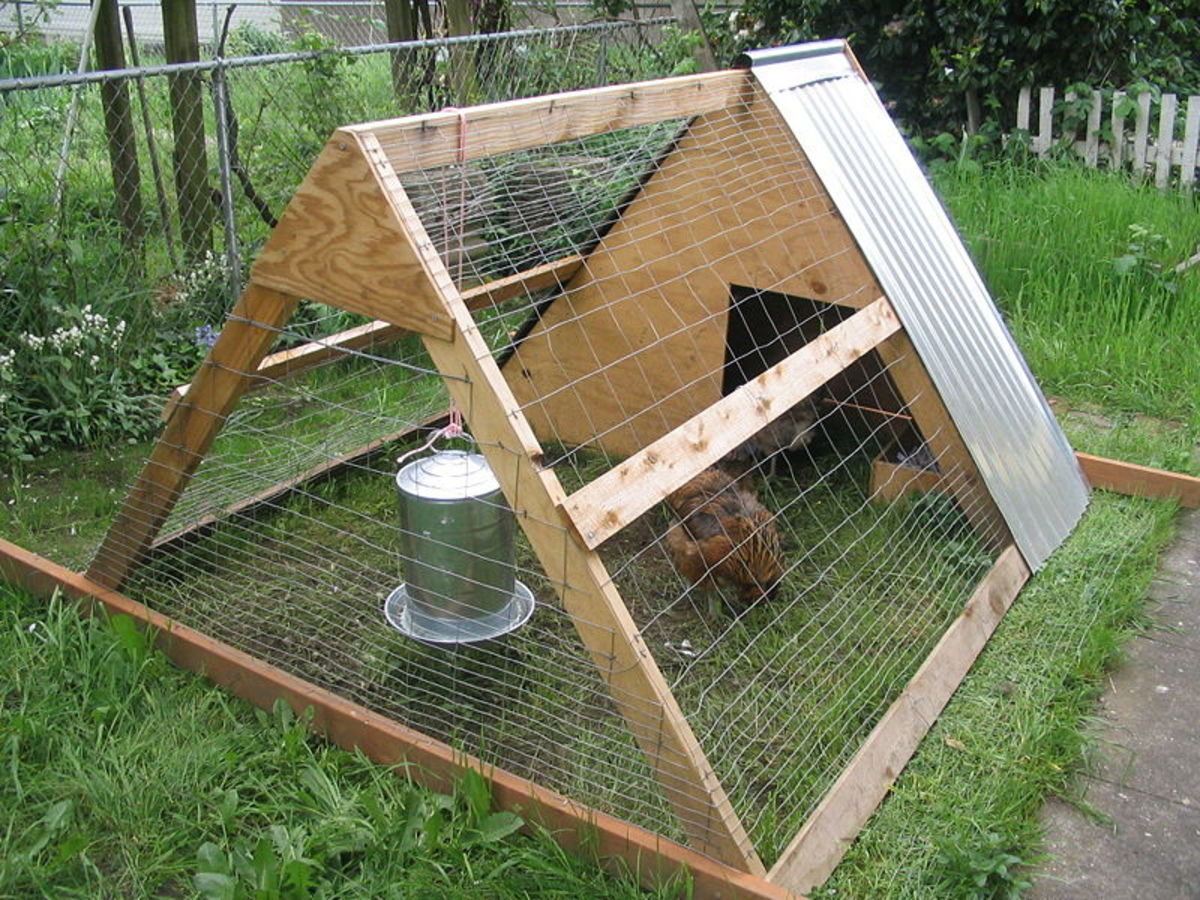In this photo is a simple chicken coop also known as a chicken tractor.