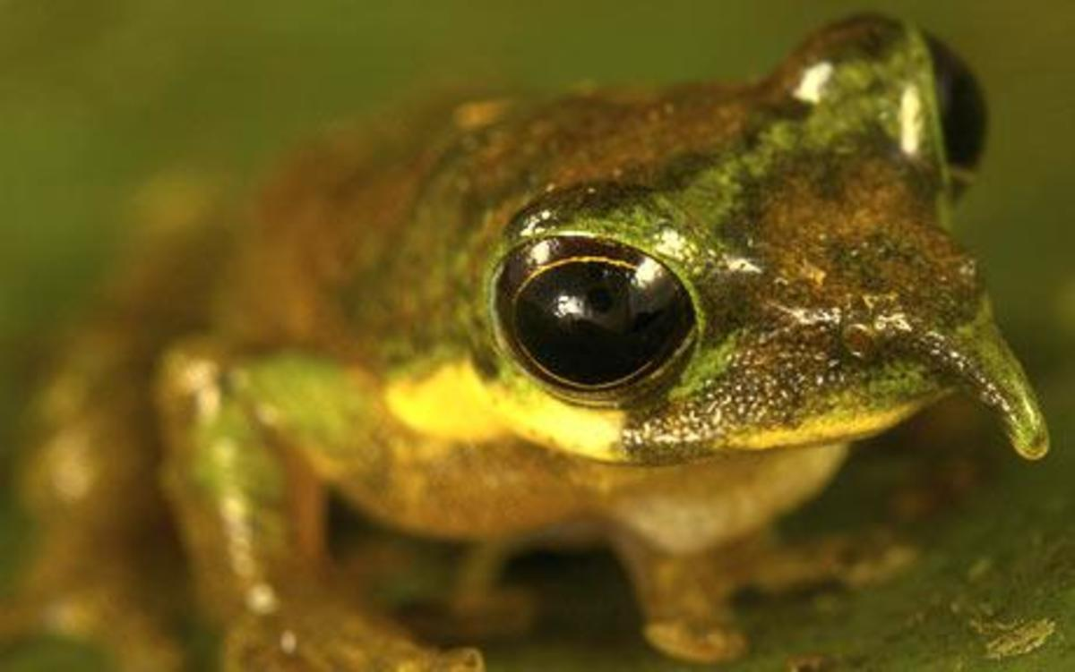 The World's Strangest Frogs