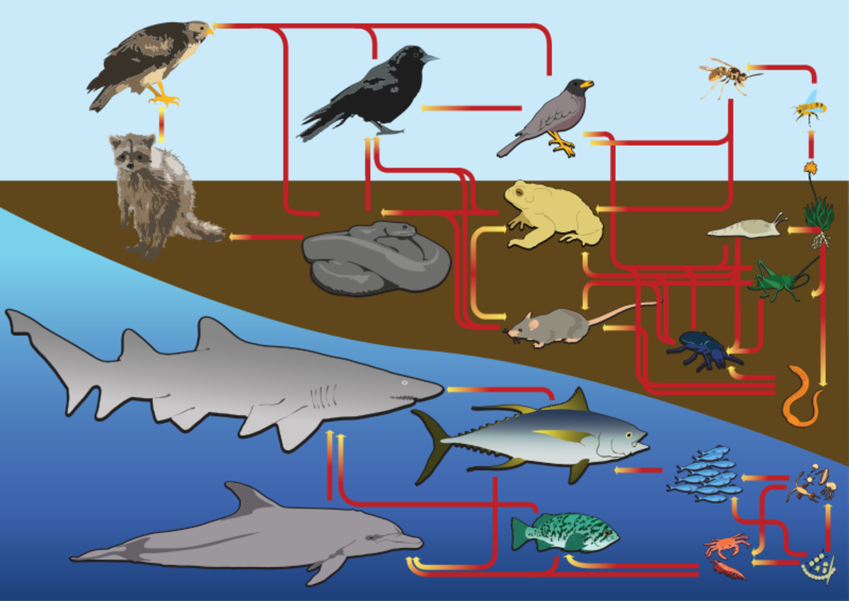 Food webs can be used for animals that live in the water and on land