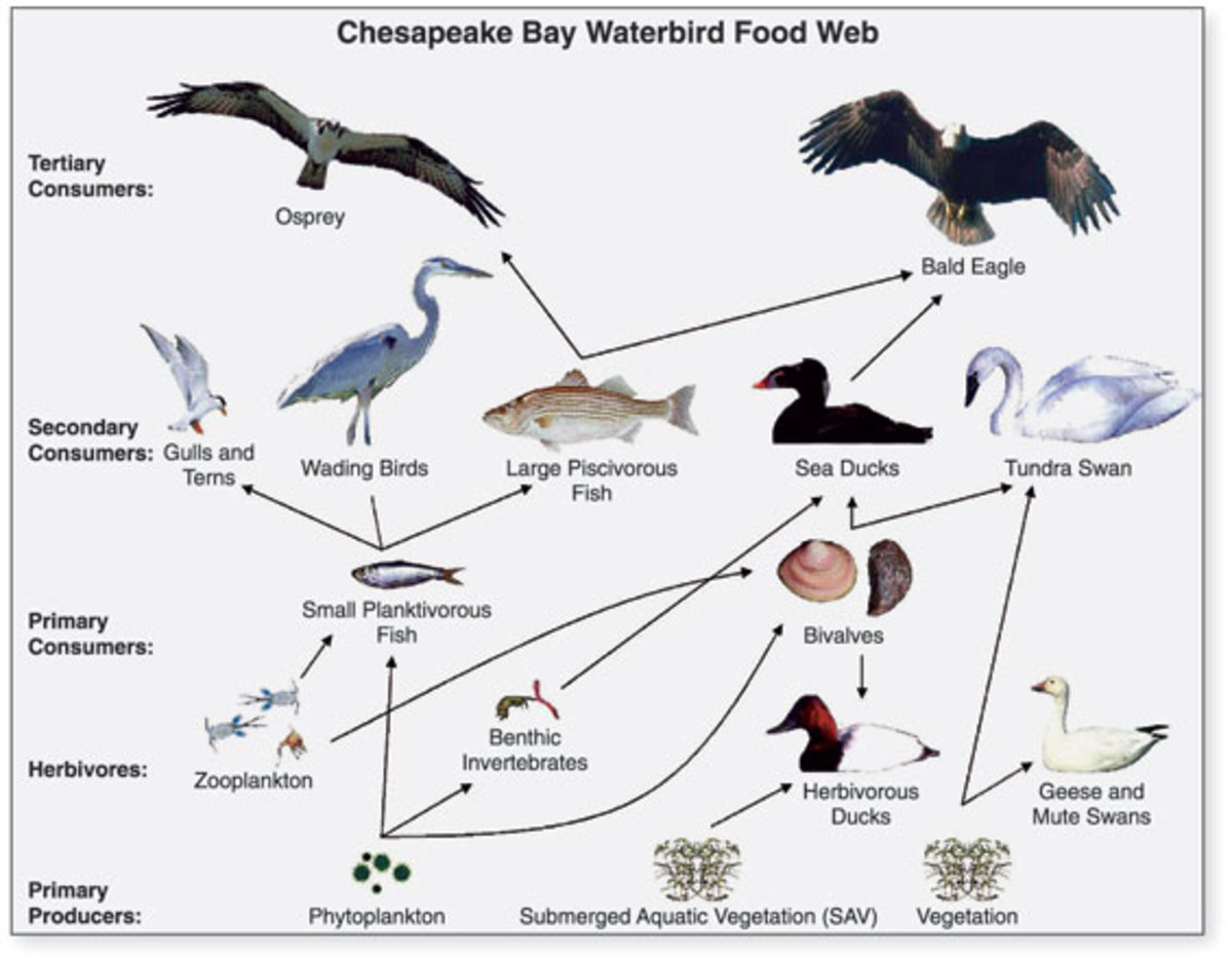Food webs can have several connections