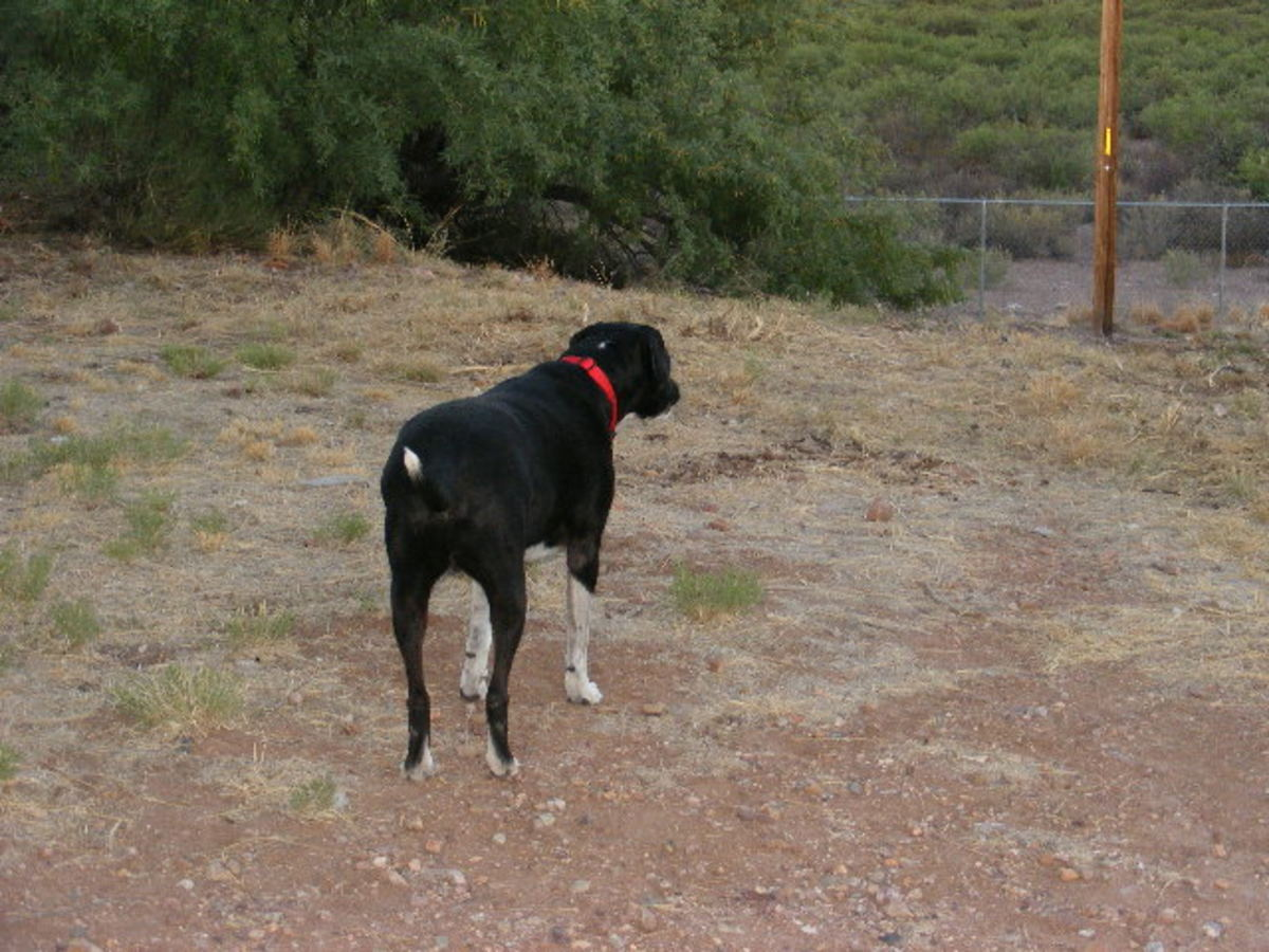 Outdoor Dogs Behavior Problems