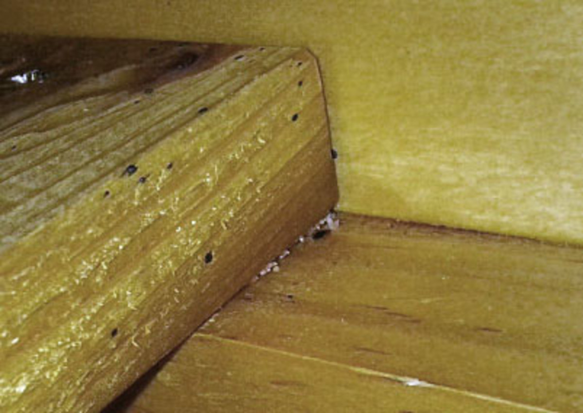 These pictures are of the slats underneath the mattress and show a couple very obvious tell-tale signs of bedbugs.  One, the black spotting on the wood.  Two, the white eggs.