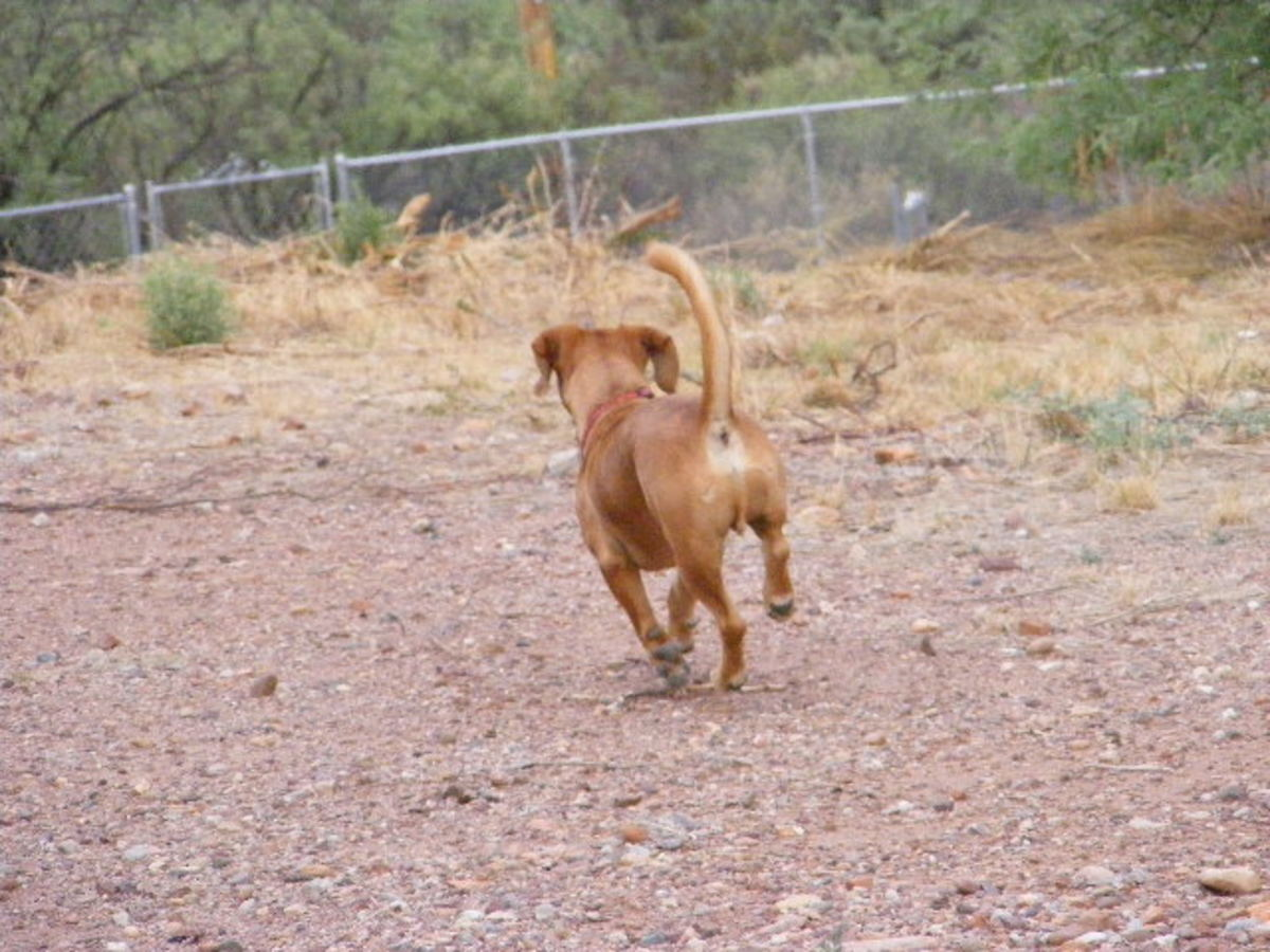 Going, going, gone! How to teach a recall to off leash dogs?