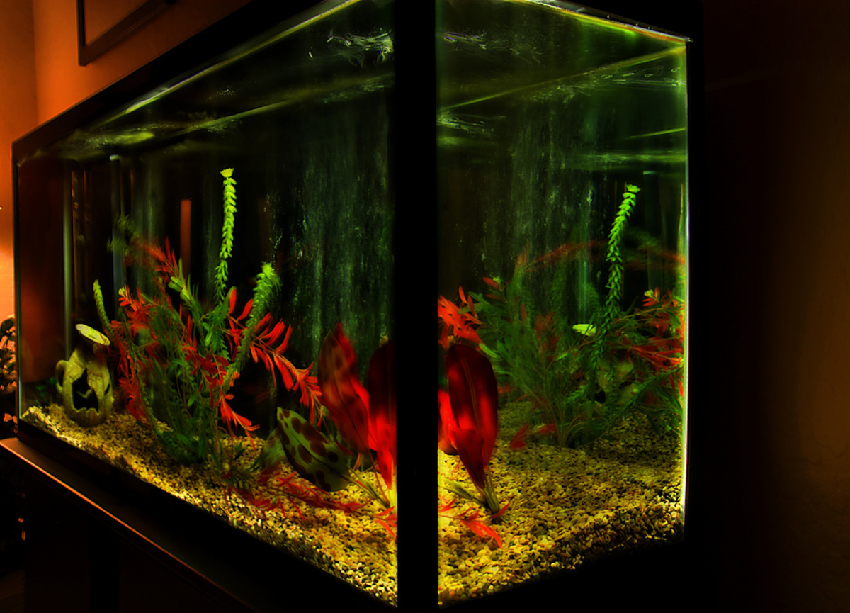 Fish tanks can look stunning with enough decorations, plants and lights.