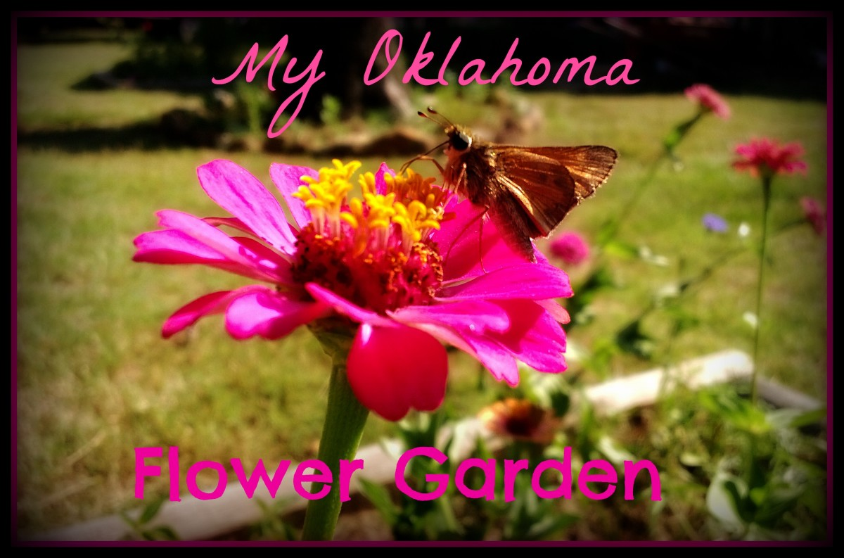 My Oklahoma Flower Garden