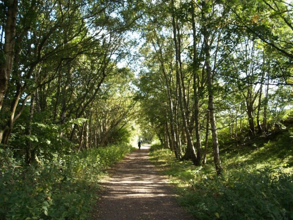 Lambley Railway Walk, the course of the railway is now a foot and cycle path