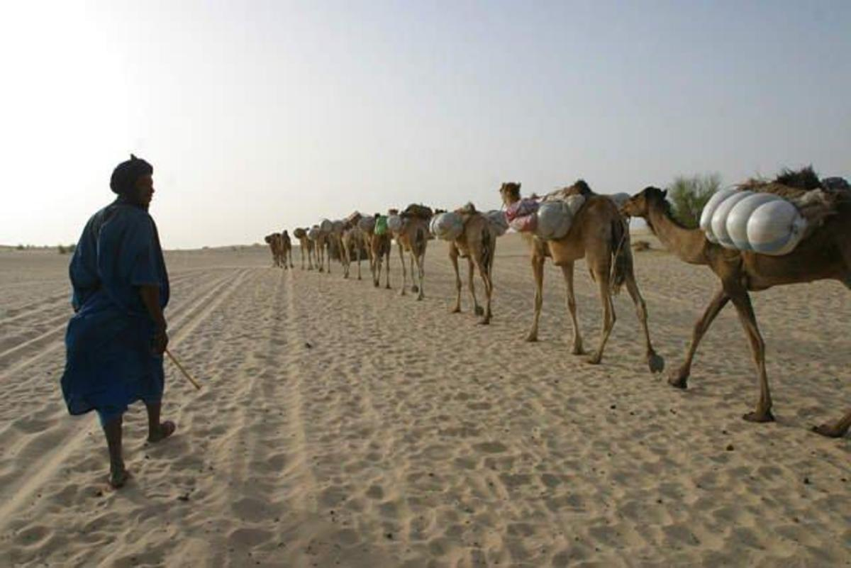 The most common way salt slabs were transported today during ancient time in the Sahara Desert