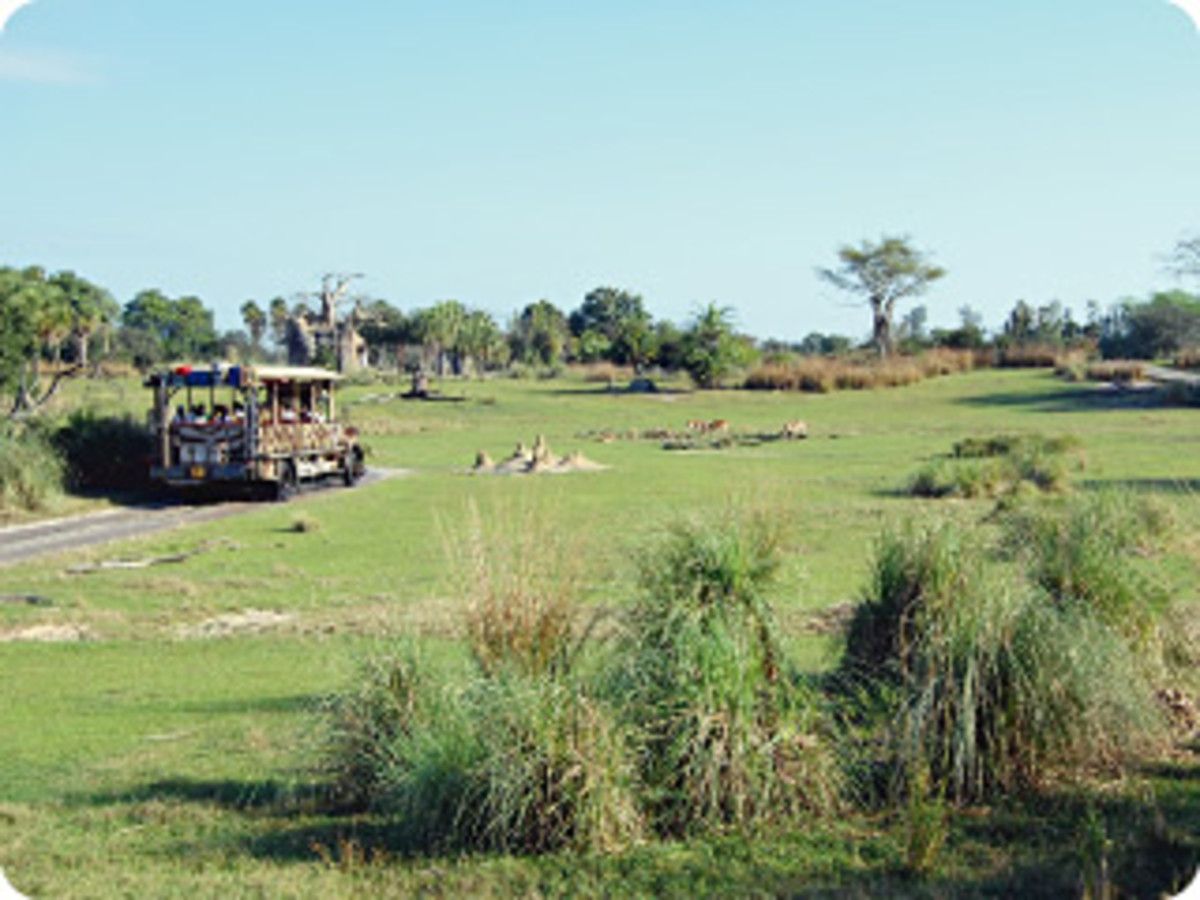 Safari vehicle roaming the savannah of Walt Disney World's Animal Kingdom Kilimanjaro Safaris adventure.
