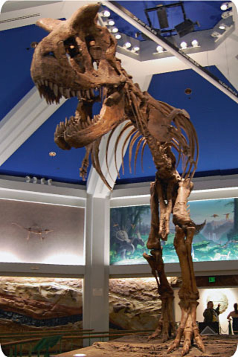 A real full-body skeleton of a Tyrannosaurus Rex looms over the queue area.