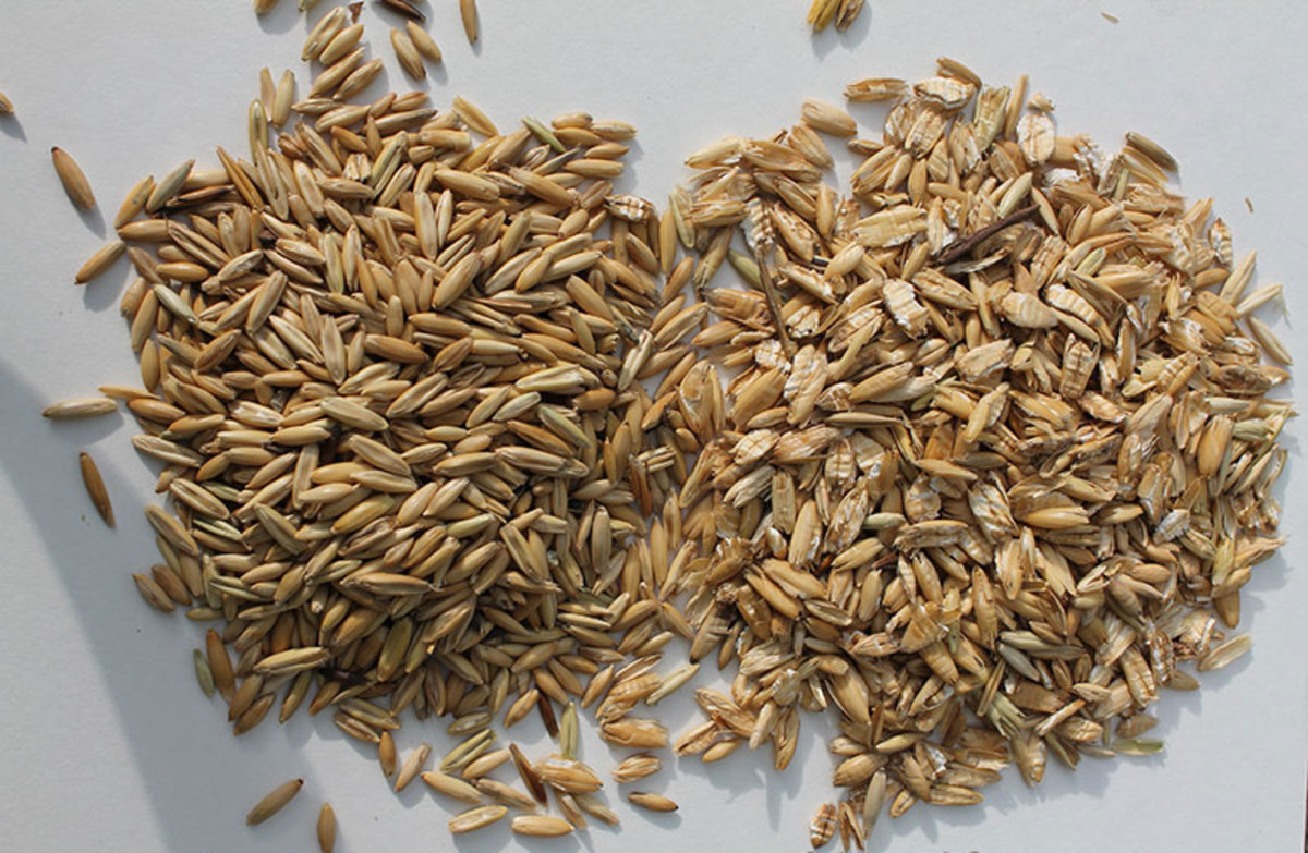 Picture shows non crimped oats on the left and crimped oats on the right.