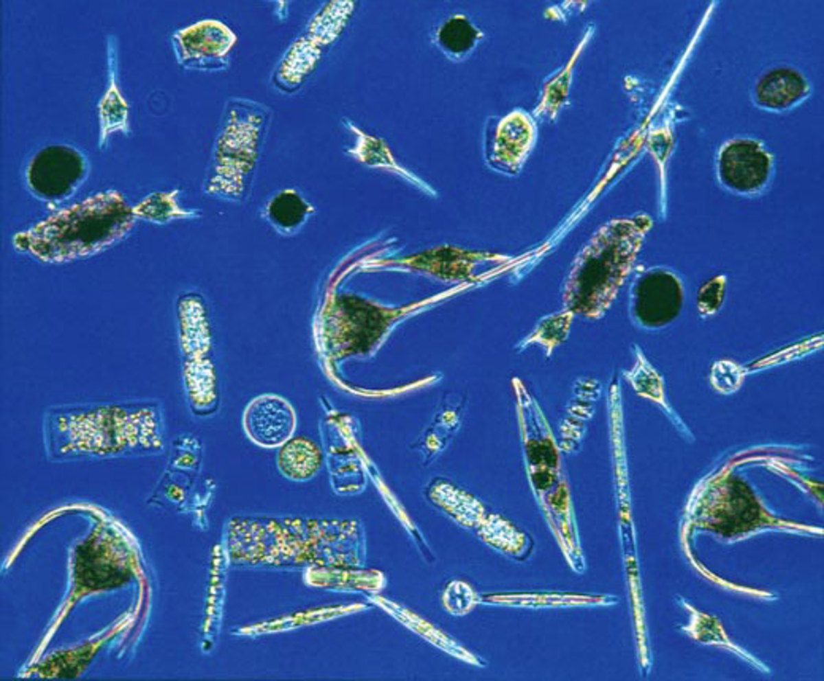 Types of Plankton