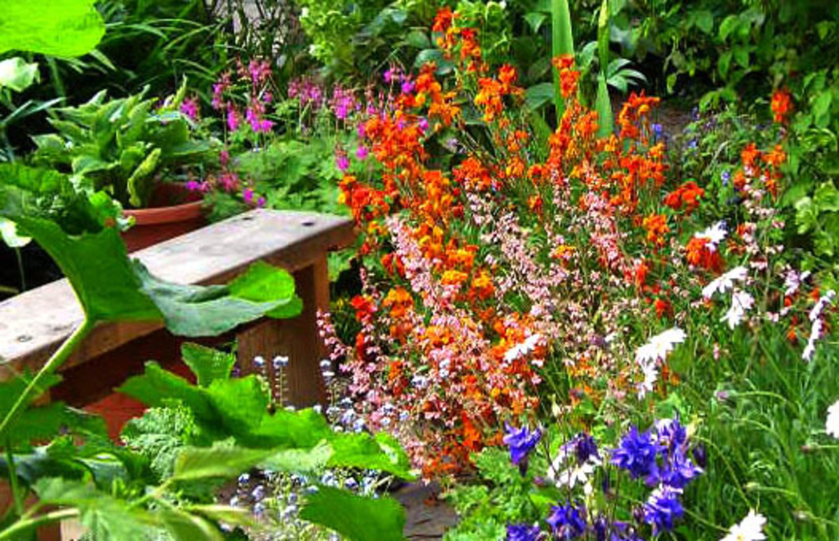 Orange Wallflowers in a Cottage Garden