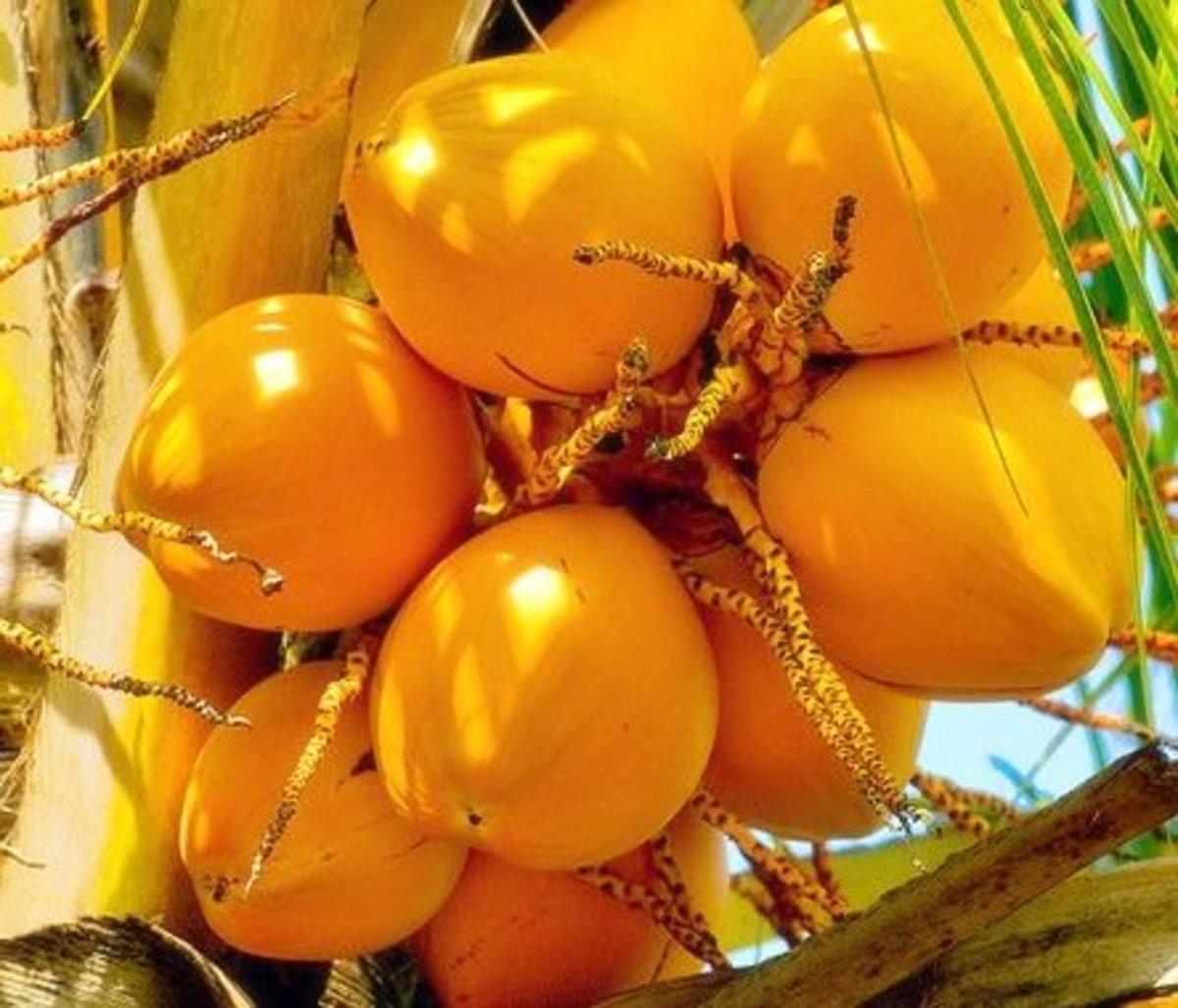Tasty King Coconut