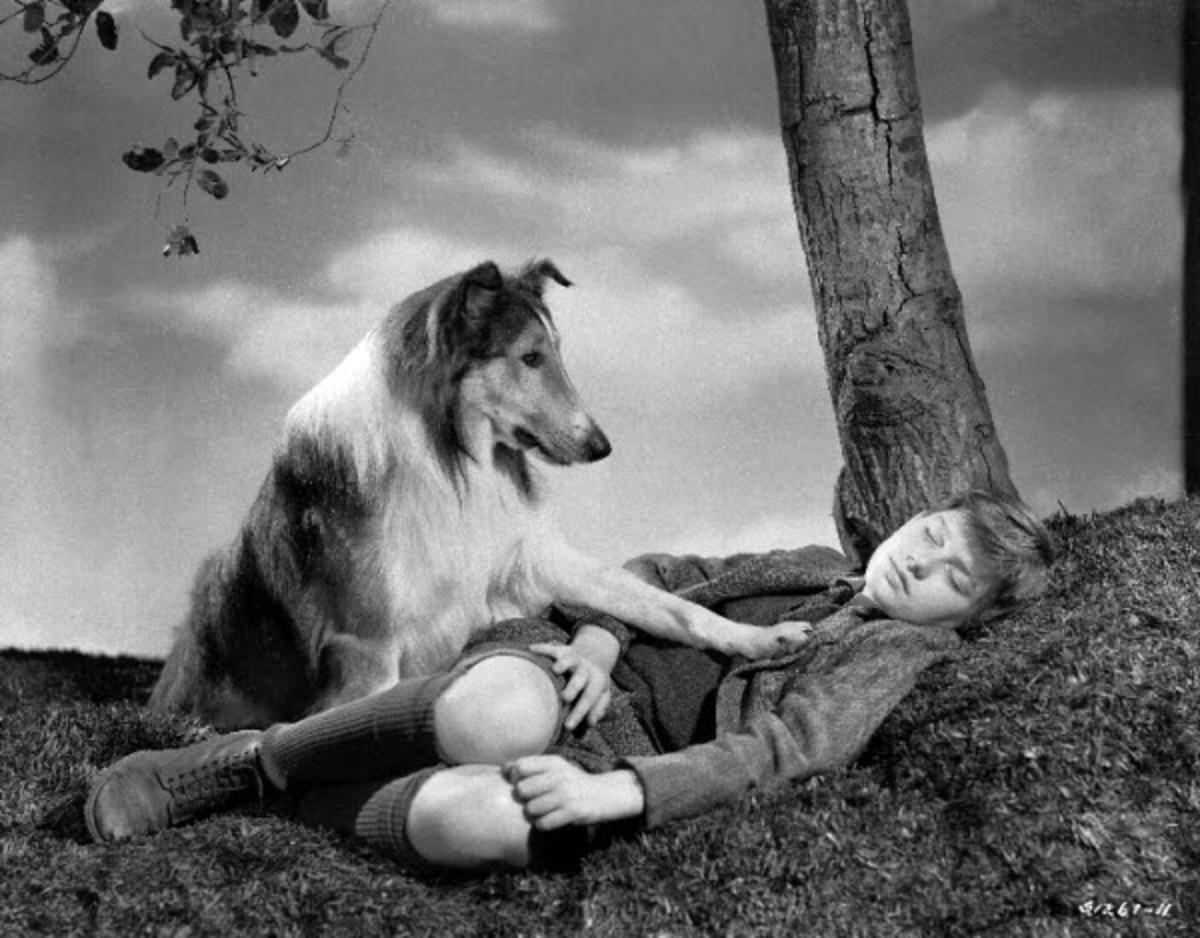 wheres-lassie