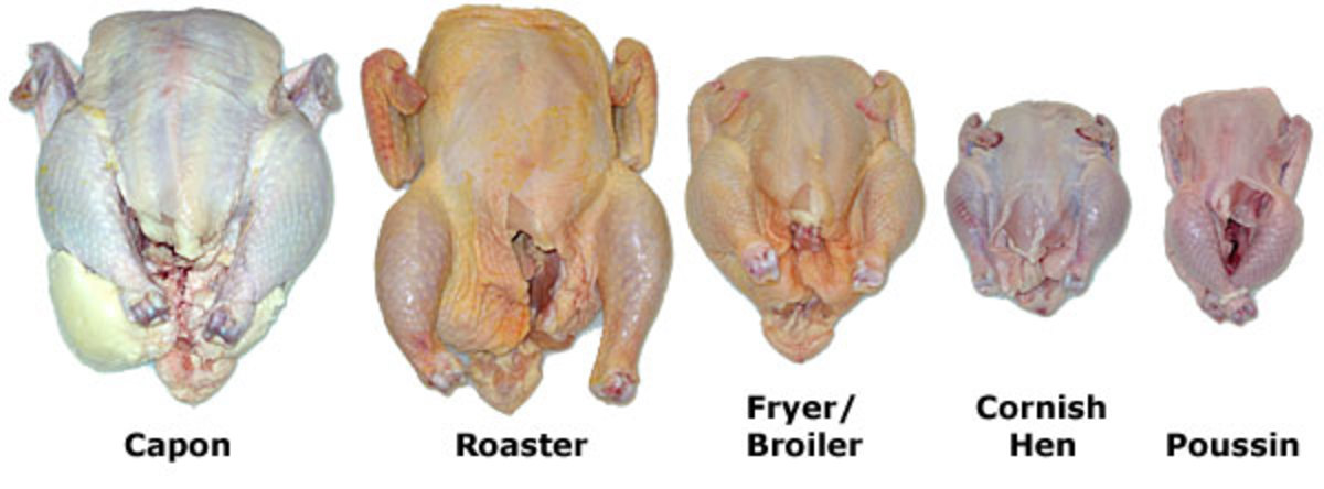 from-egg-to-roaster-the-making-of-the-modern-meat-chicken