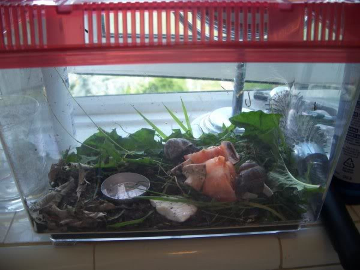 Another example of a small tank for 1-2 small snails