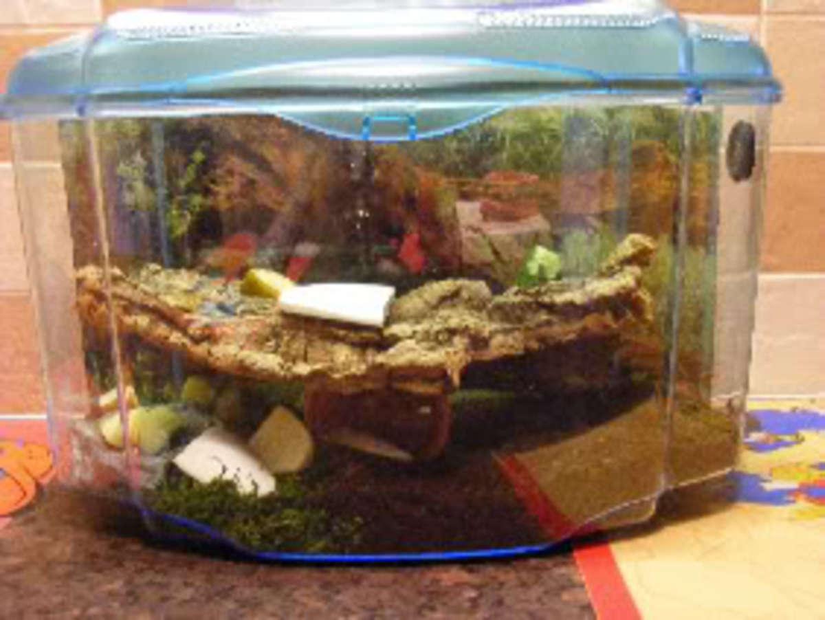 Good example of a snail habitat