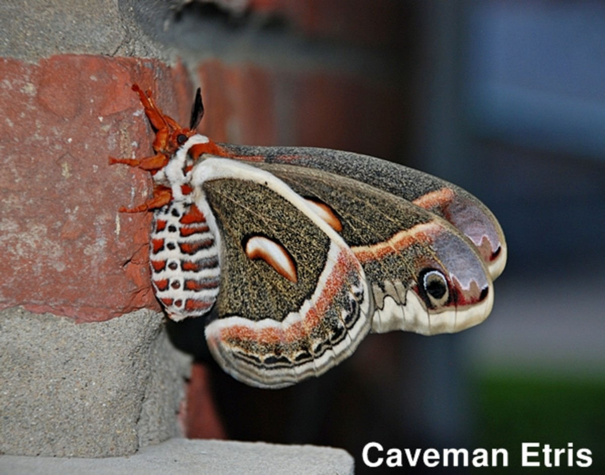 Side view of the moth on brick wall out back.