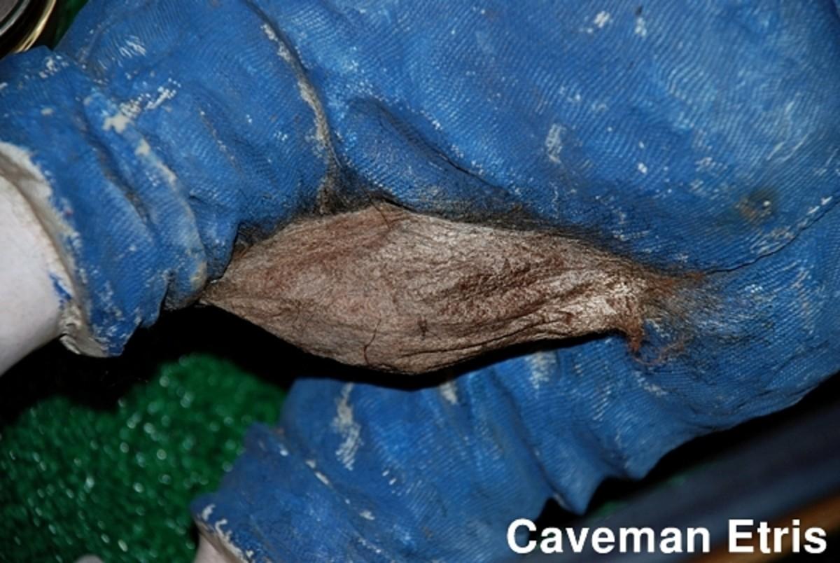 Cecropia Moth - The Emerging