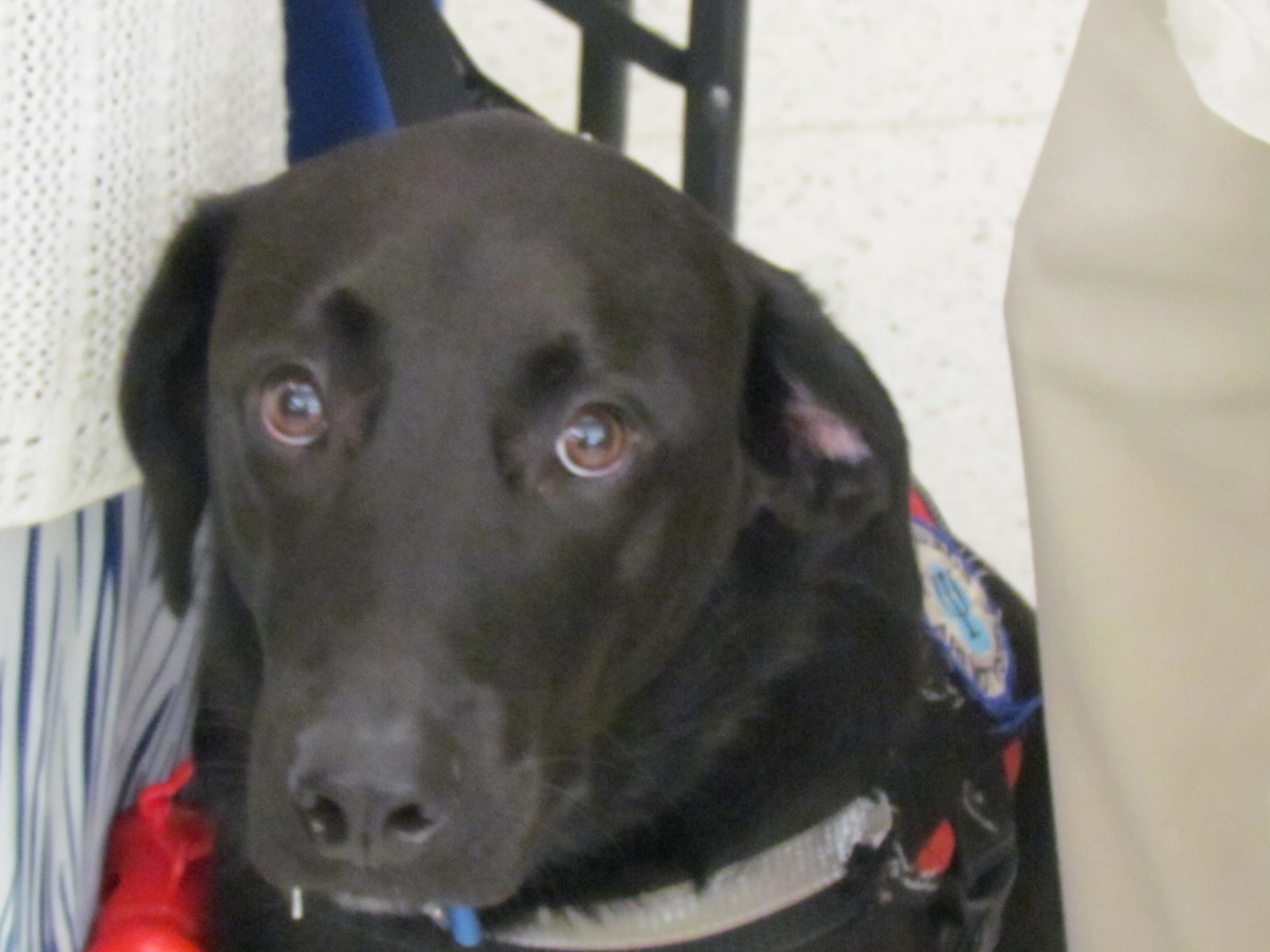 Onyx, serves as a balance dog for his owner. She explained how much they enjoyed the event.