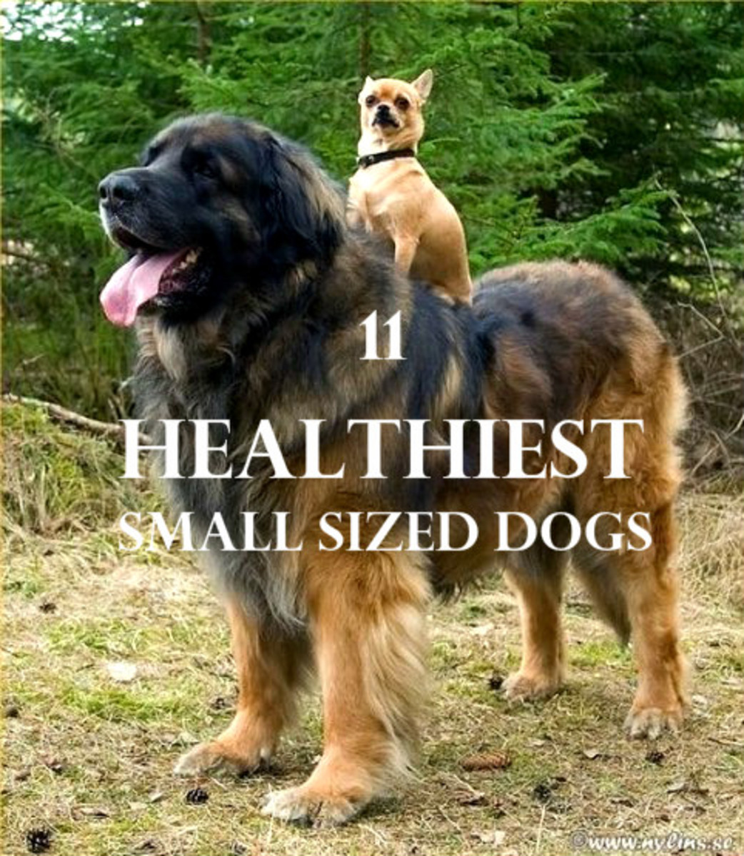 11 Healthiest Small Breed Dogs