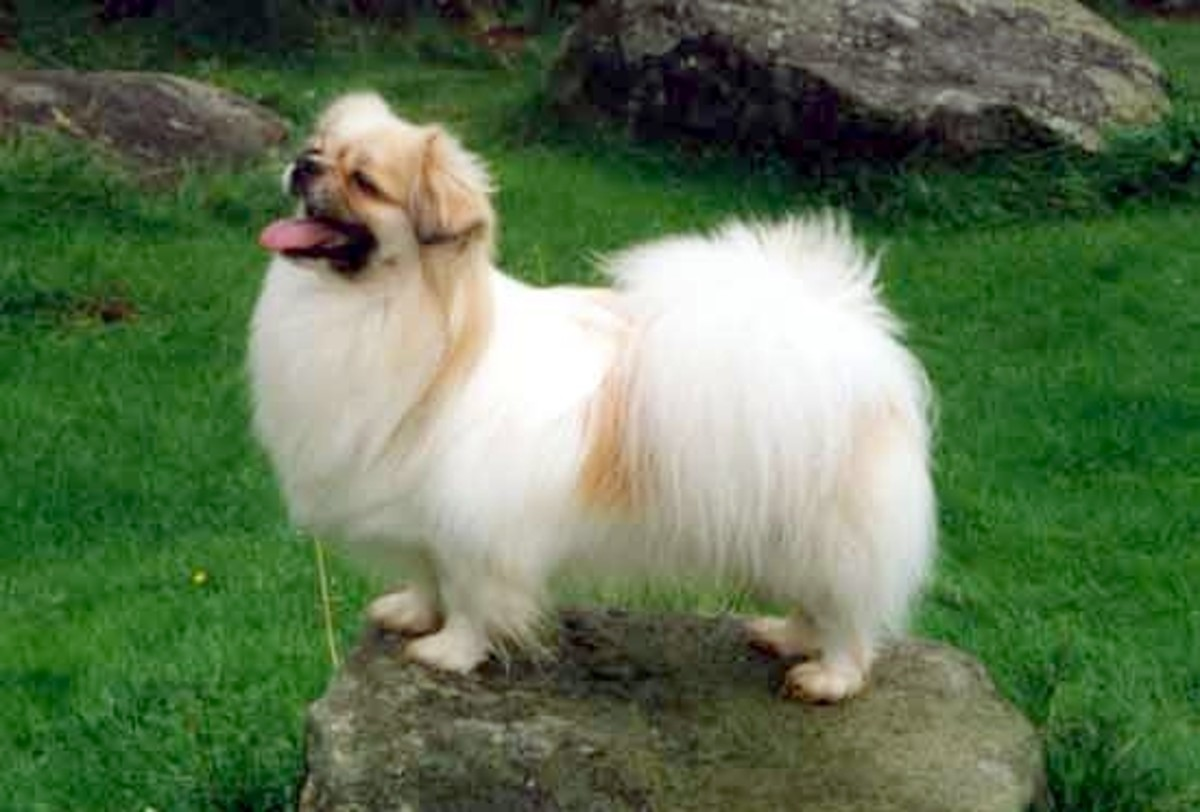 Healthiest Small Breed Dogs Hubpages