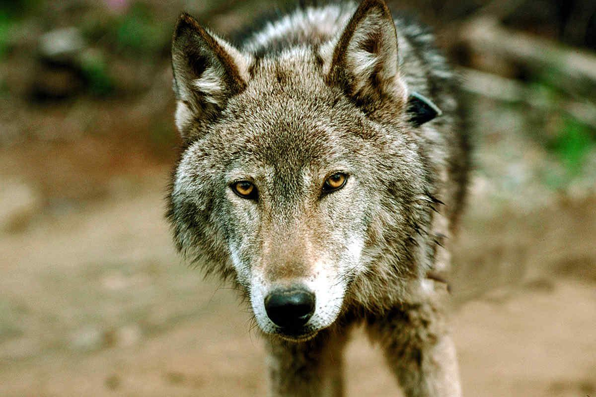 "Self-publishers have to watch out for ""wolves in publishers clothing."""