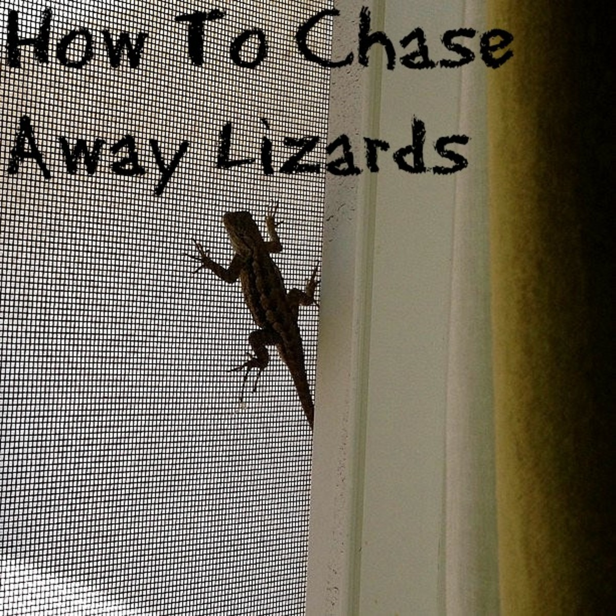 How to Chase Lizards Away Without Killing Them