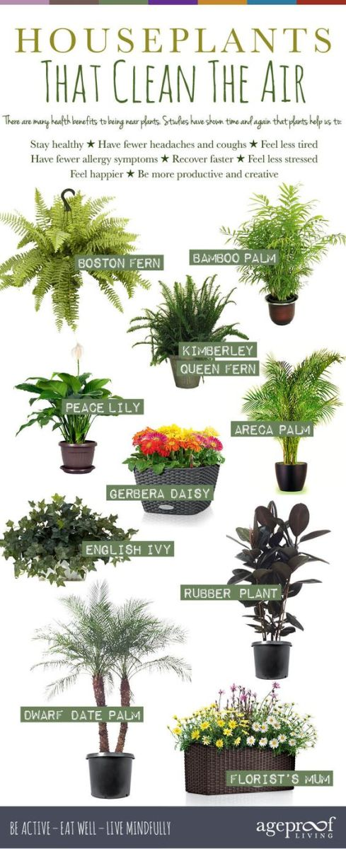 Detox your home naturally hubpages - House plant names with pictures ...